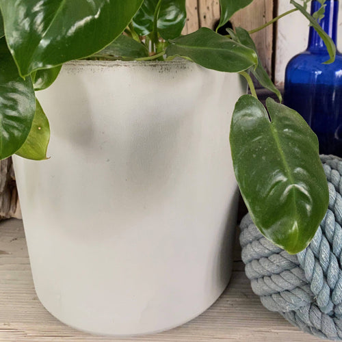 Cement Planter Cylinder Shape