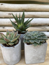 Load image into Gallery viewer, Small Cement Planter Set of 3