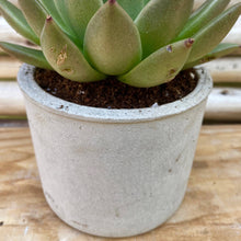 Load image into Gallery viewer, Cement Planter Cylinder Shape