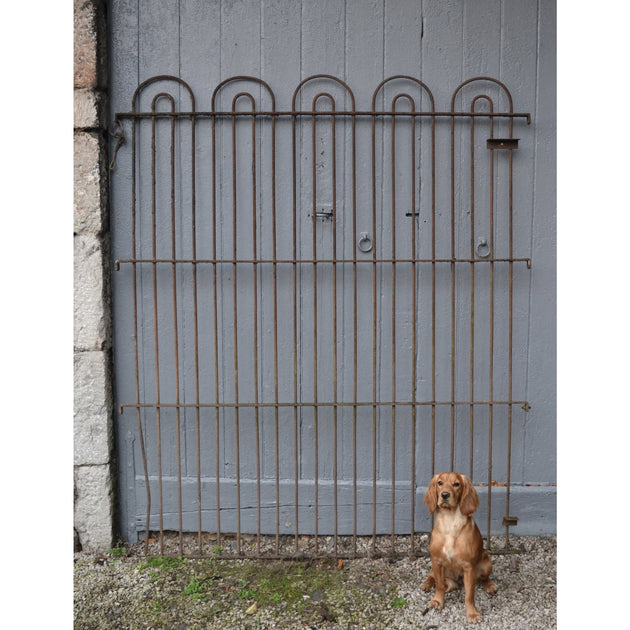 Gertie the cocker spaniel enjoying these salvaged kennel railings