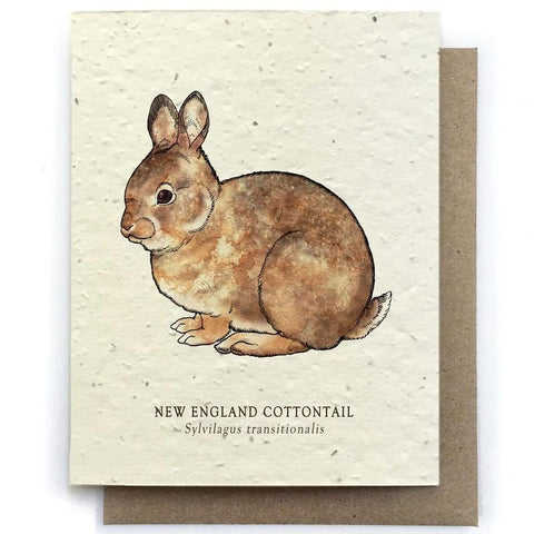 Cottontail Rabbit Greeting Cards - Plantable Seed Paper