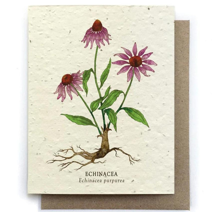 Echinacea Botanical Greeting Cards - Plantable Seed Paper