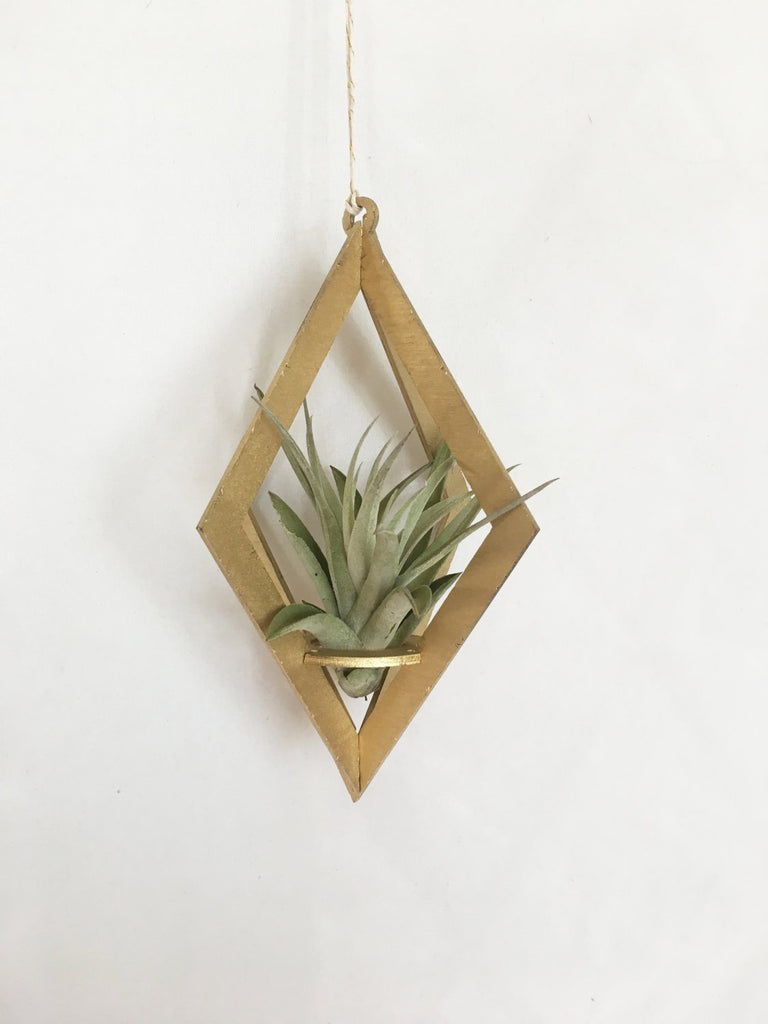 Savvie Studio - Air Plant Hanger >> Diamond >> Gold