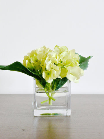 Green Hydrangea in Glass Cube
