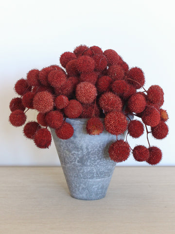 Bayberry Pot