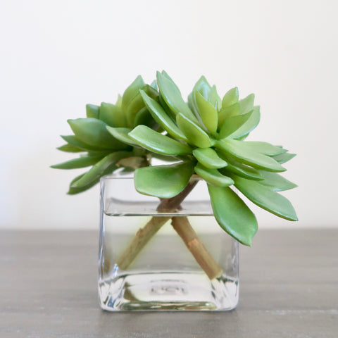 Succulent in Glass Cube