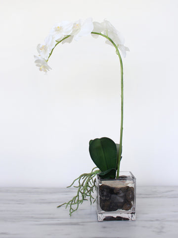 Orchid Phalaenopsis Cube Glass