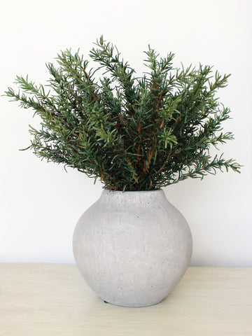Rosemary in Olive Jar