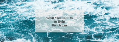What You Can Do to Help the Ocean