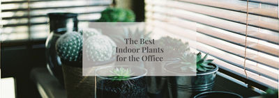 The Best Indoor Plants for the Office