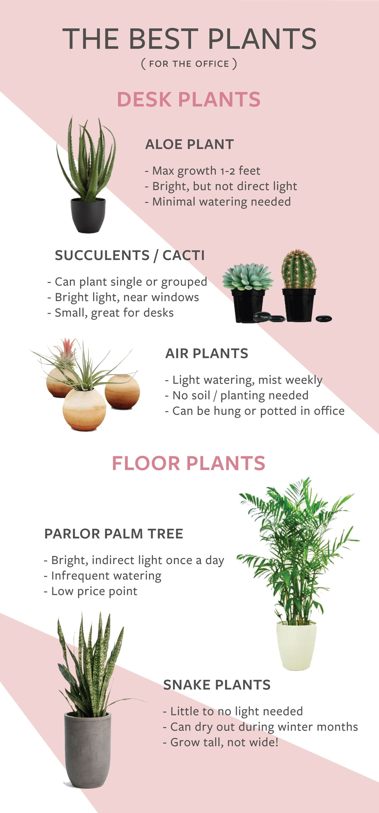 The Best Indoor Office Plants