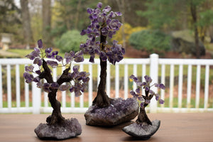 Tree-Sodalite-Bonsai Tree-Amethyst