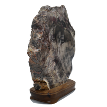 Load image into Gallery viewer, Petrified Wood in Wood Base