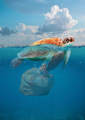 Painting of sea turtle with large plastic bag stuck and dragging below its body