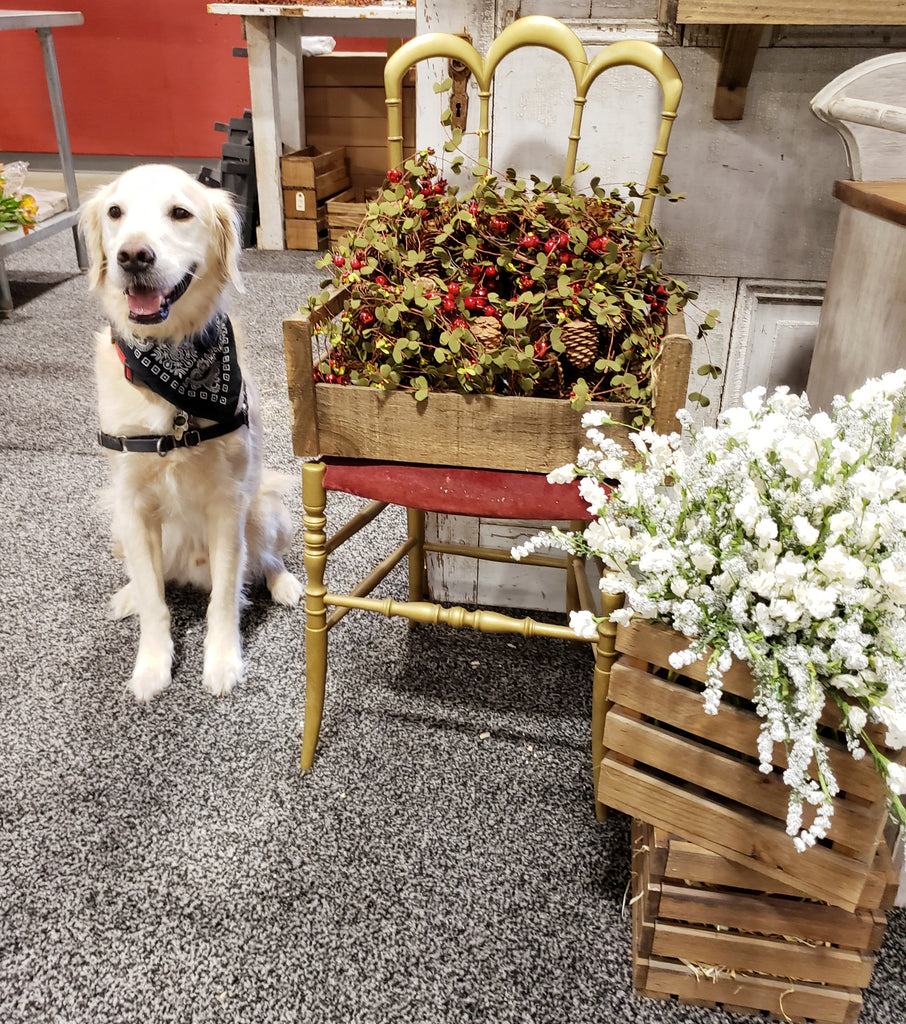 The Capital Home Show Fall 2019