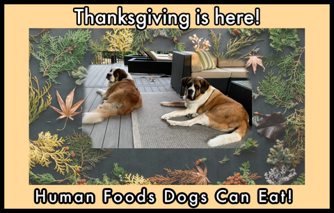 Human Foods Dogs Can Eat