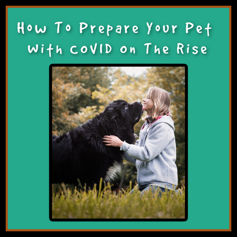 How to prepare your pet with COVID on the rise