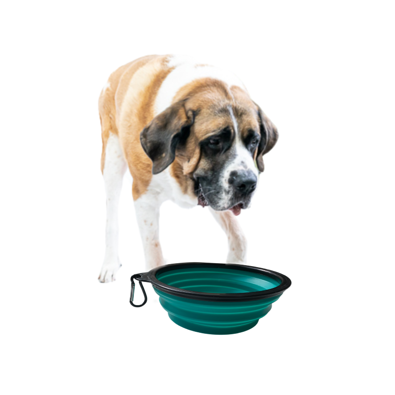 Travel Big Dog Bowl with Carabiner TEAL