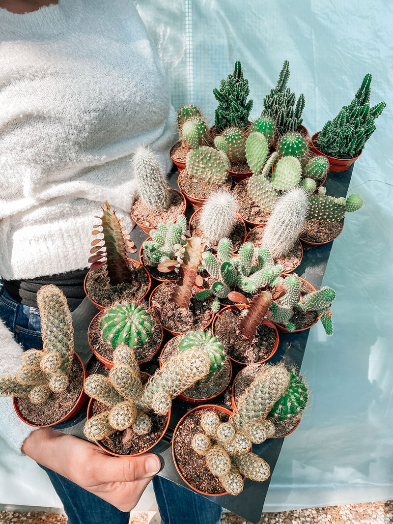 "3"" Cactus Assortment Pack"