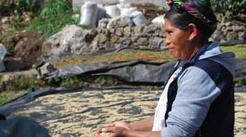 Guatemala ~ Our Fruitful Relationship with CODECH Farmers