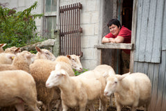Farmer Chantal Gillet with her sheep