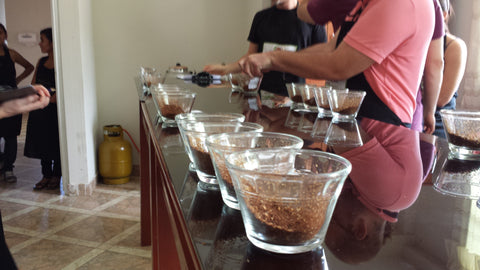 Cupping single producer lots at the QC lab in Jaén