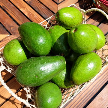 Davao Avocado (sold per kg)