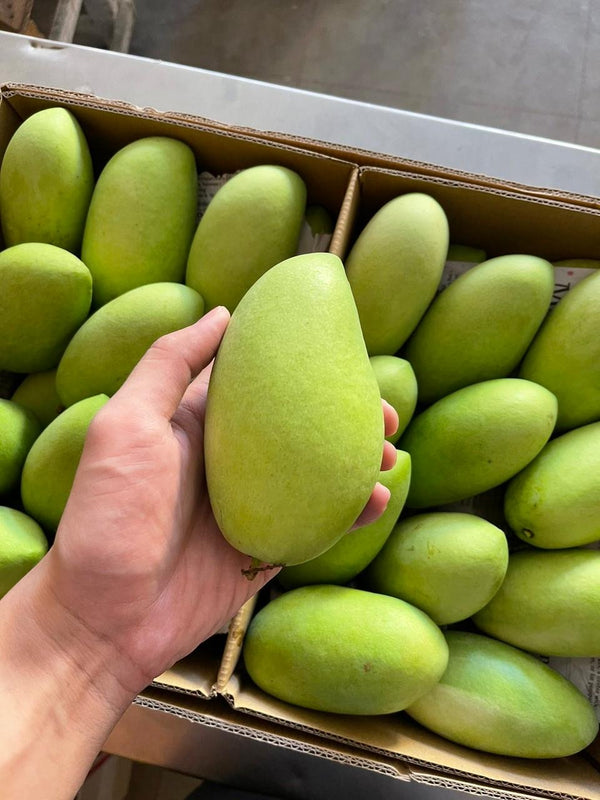 Davao Mangoes (Export Quality)
