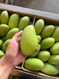 Davao Mangoes (Export Quality) By The Box (18kg)