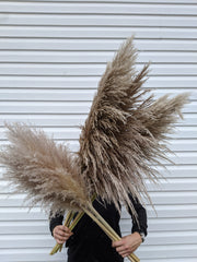 Large Brown/Grey Pampas (per stem)