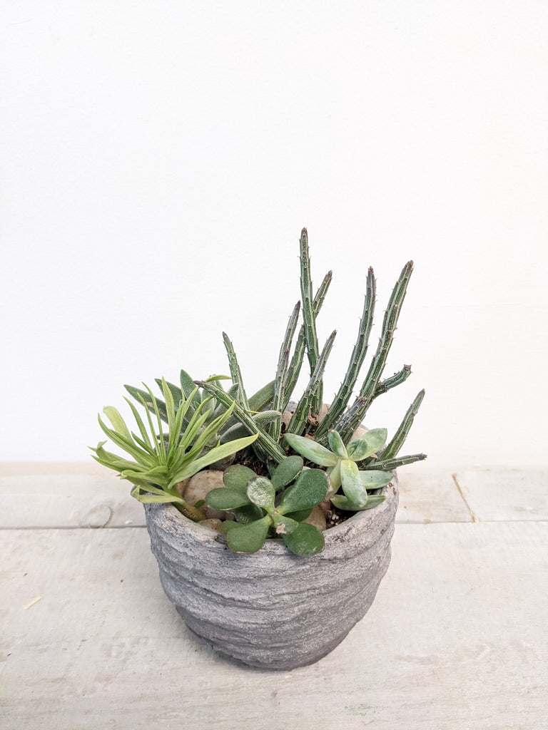 Cement Succulent Planter