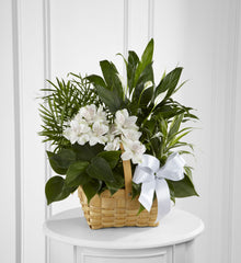 The FTD Peace & Serenity Dishgarden (S9-4454) - Beaudry Flowers