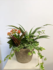 Tropicals Planter