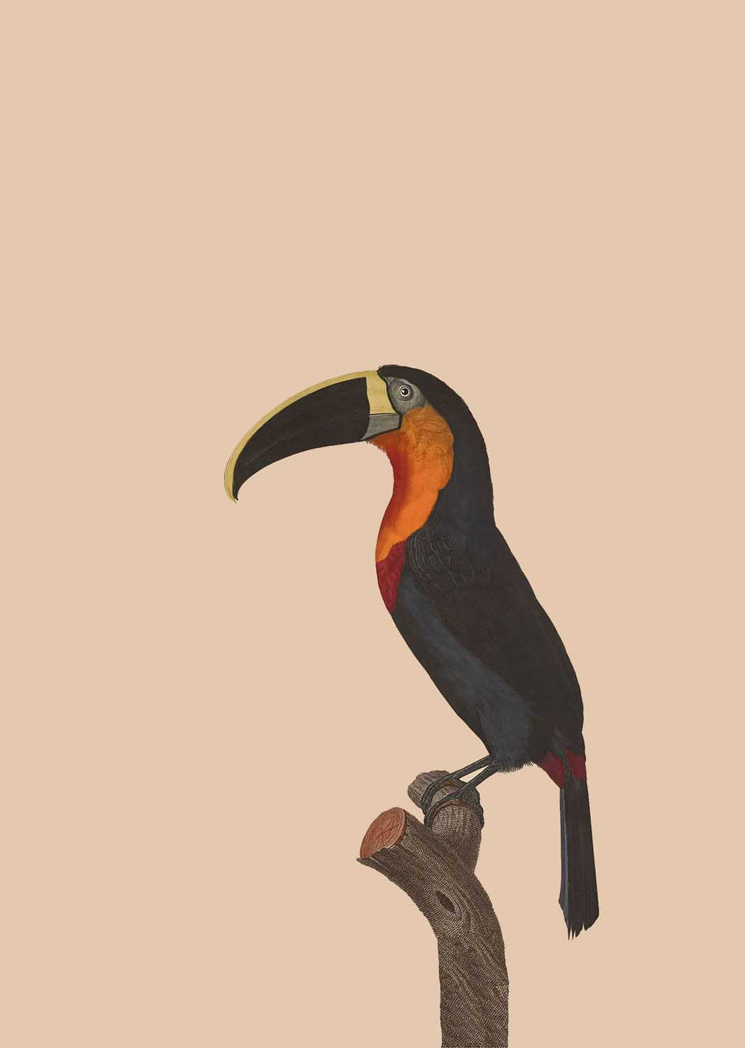 Troublemaker Toucan A3 Digital Print - ad&i