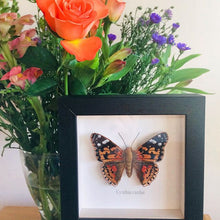 Load image into Gallery viewer, Embroidered Painted Lady Butterfly Framed Wall Art
