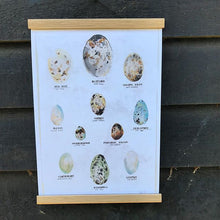 Load image into Gallery viewer, Bird Egg A3 Digital Print by Abby Cook - ad&i