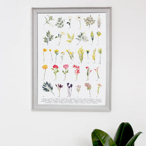 British Wild Flower A3 Digital Print by Abby Cook