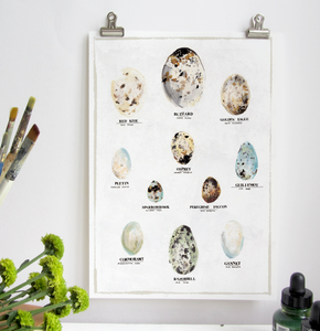 Bird Egg A3 Digital Print by Abby Cook