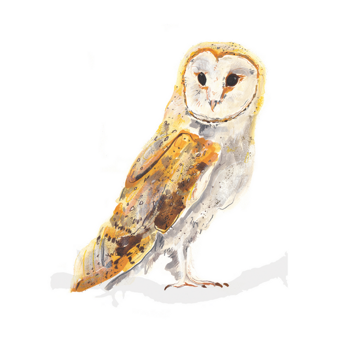 Barn Owl A4 Digital Print by Abby Cook