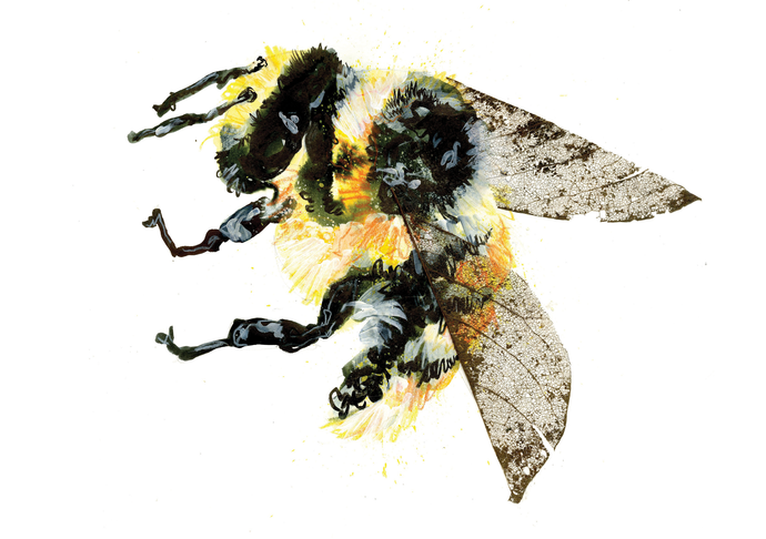 Bumble Bee A5 Digital Print by Abby Cook