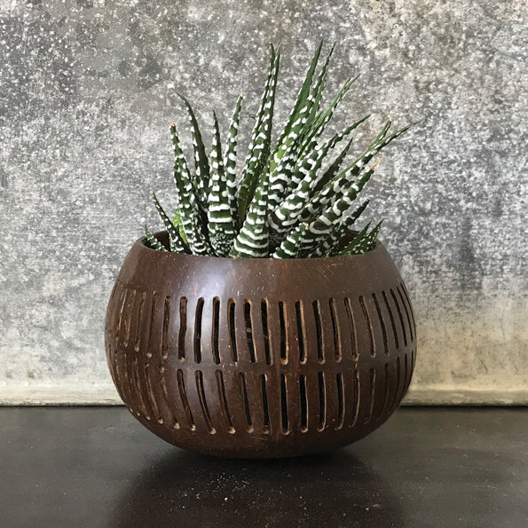 Vertical Lines Coconut Plant Bowl - ad&i