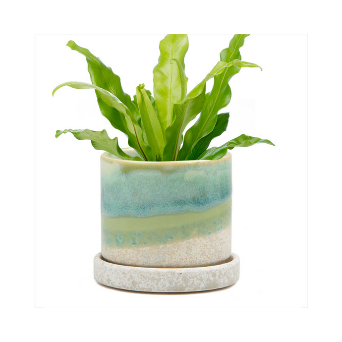 Green Cement Dip Dyed Succulent Plant Pot and Saucer