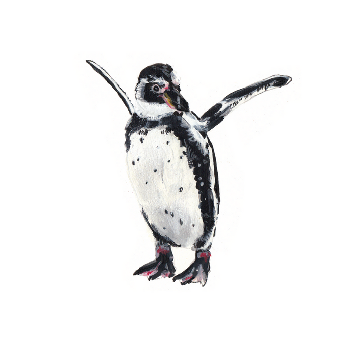 Humboldt Penguin A4 Digital Print by Abby Cook