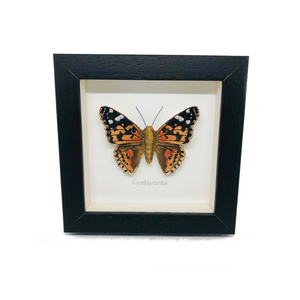 Embroidered Painted Lady Butterfly Framed Wall Art - ad&i