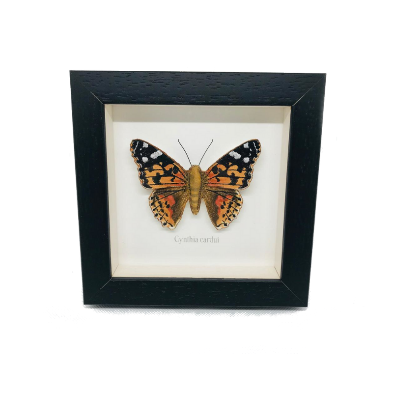 Embroidered Painted Lady Butterfly Framed Wall Art