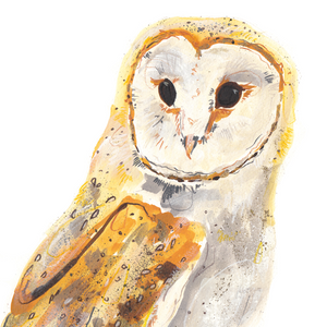Barn Owl A4 Digital Print by Abby Cook - ad&i