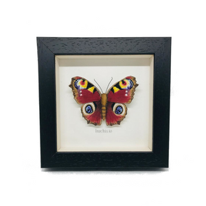 Embroidered and Painted Peacock Butterfly Framed Wall Art