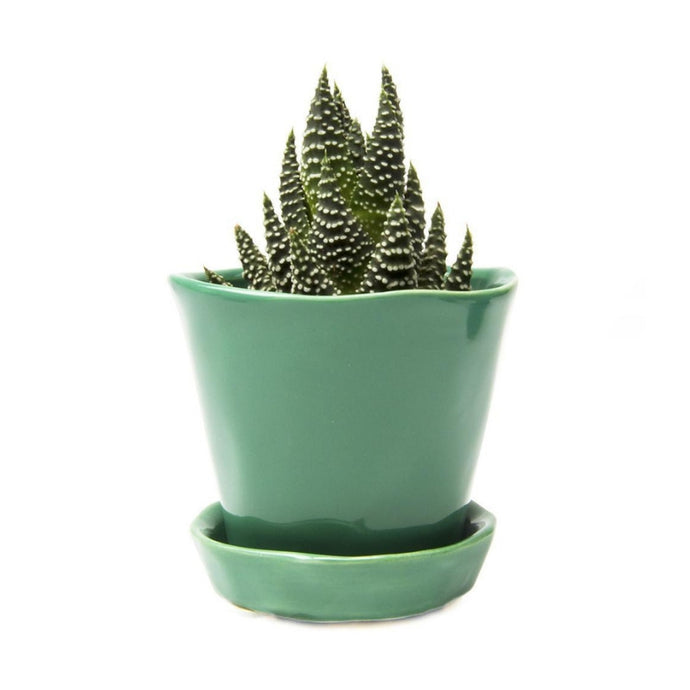 Tika Succulent Plant Pot and Saucer