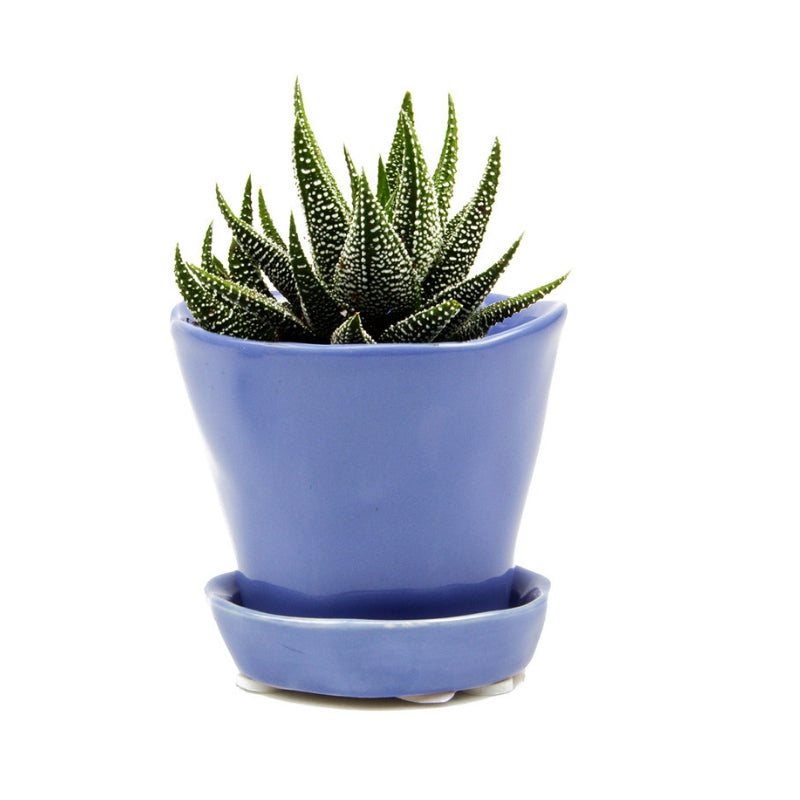 Periwinkle Tika Succulent Plant Pot and Saucer - ad&i