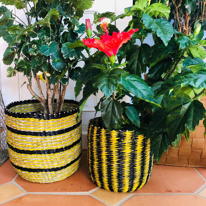 Large Coloured Seagrass Planters Set of Two